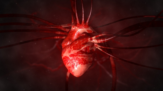 Heart with arteries and veins