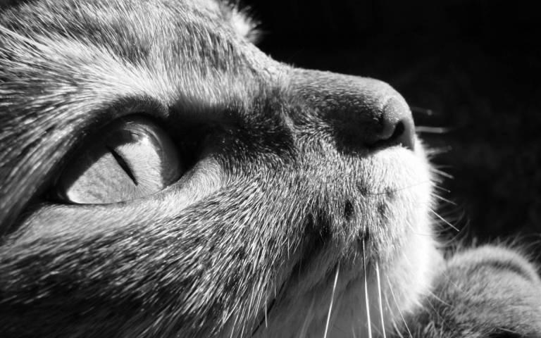 perfil-en-blanco-y-negro-de-la-cara-de-un-gato